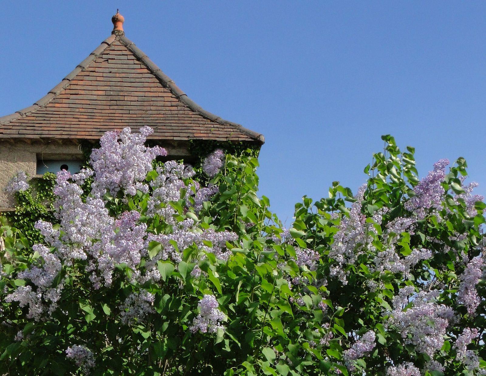 Domaine Les Cyprès - Maison et jardin - le mois d'avril