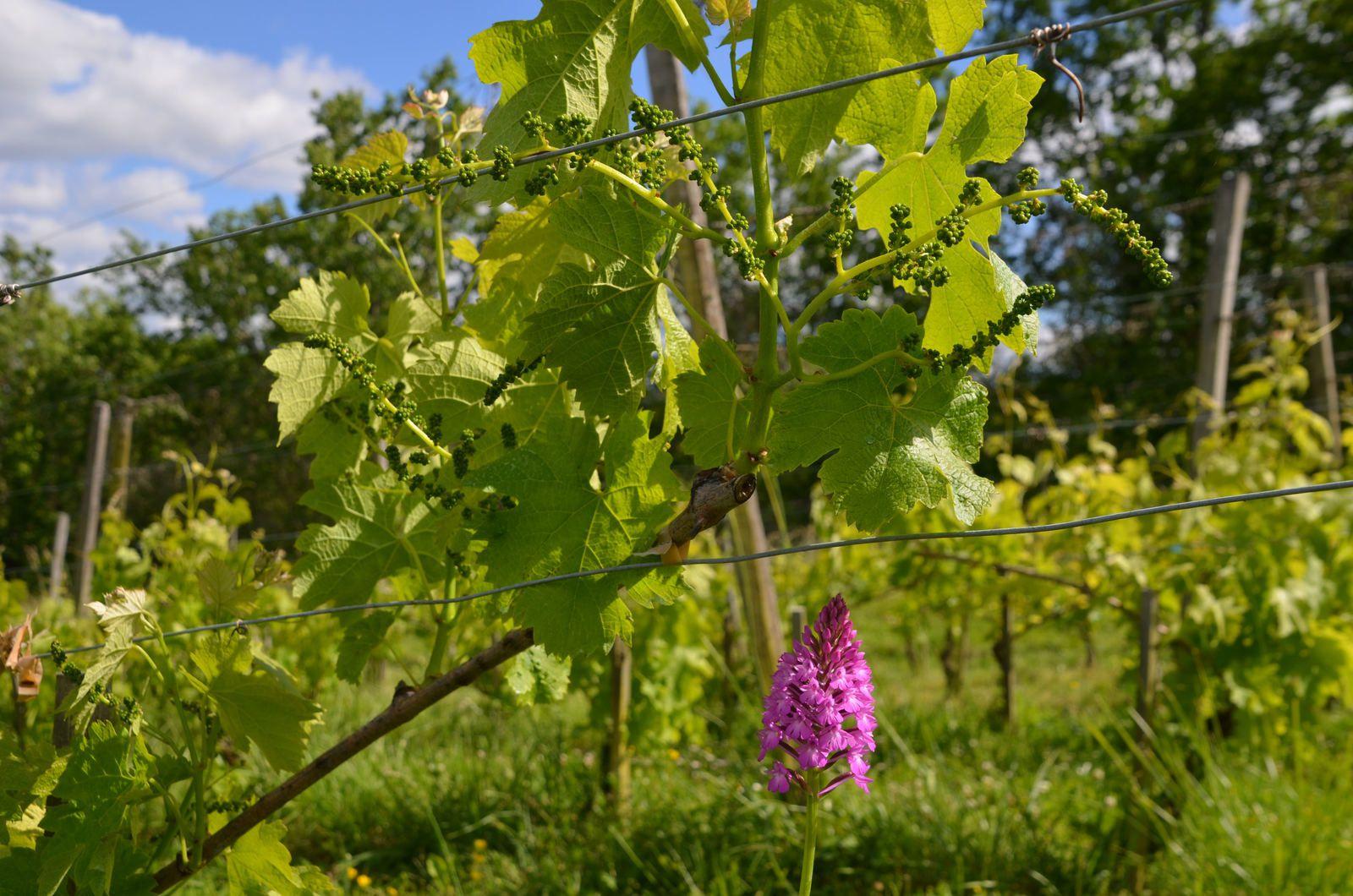 Domaine les Cyprès - atelier - potager - vignoble