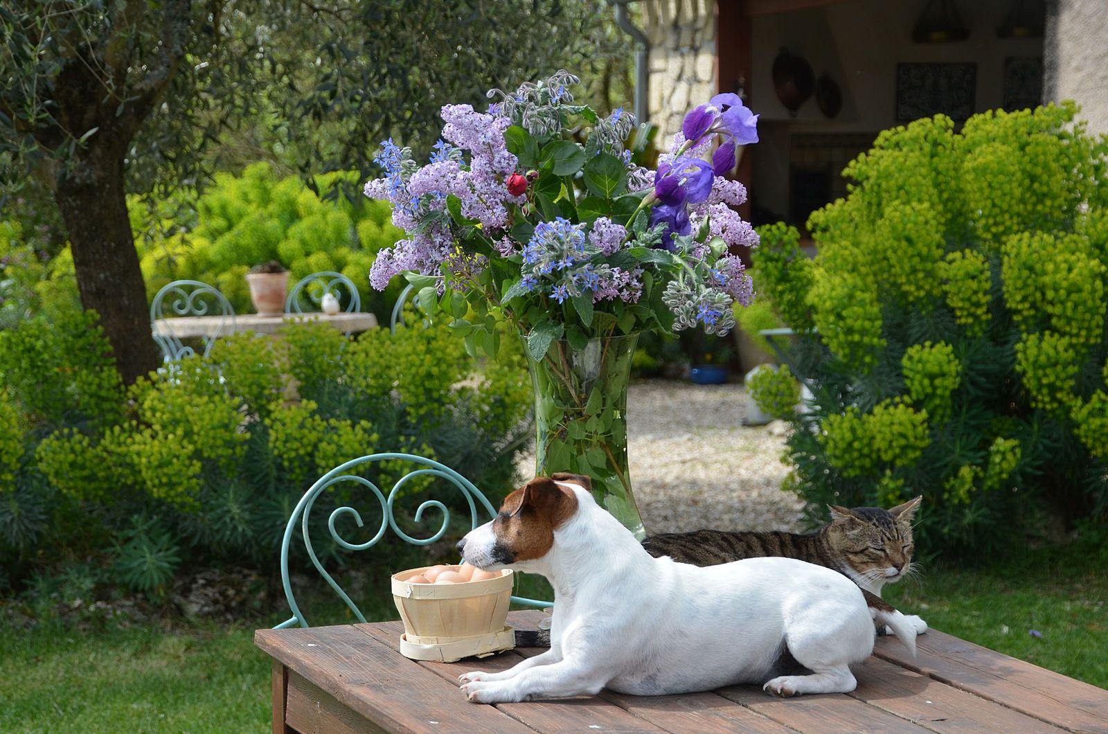 Domaine Les Cyprès -Atelier -jardin- fleurs !