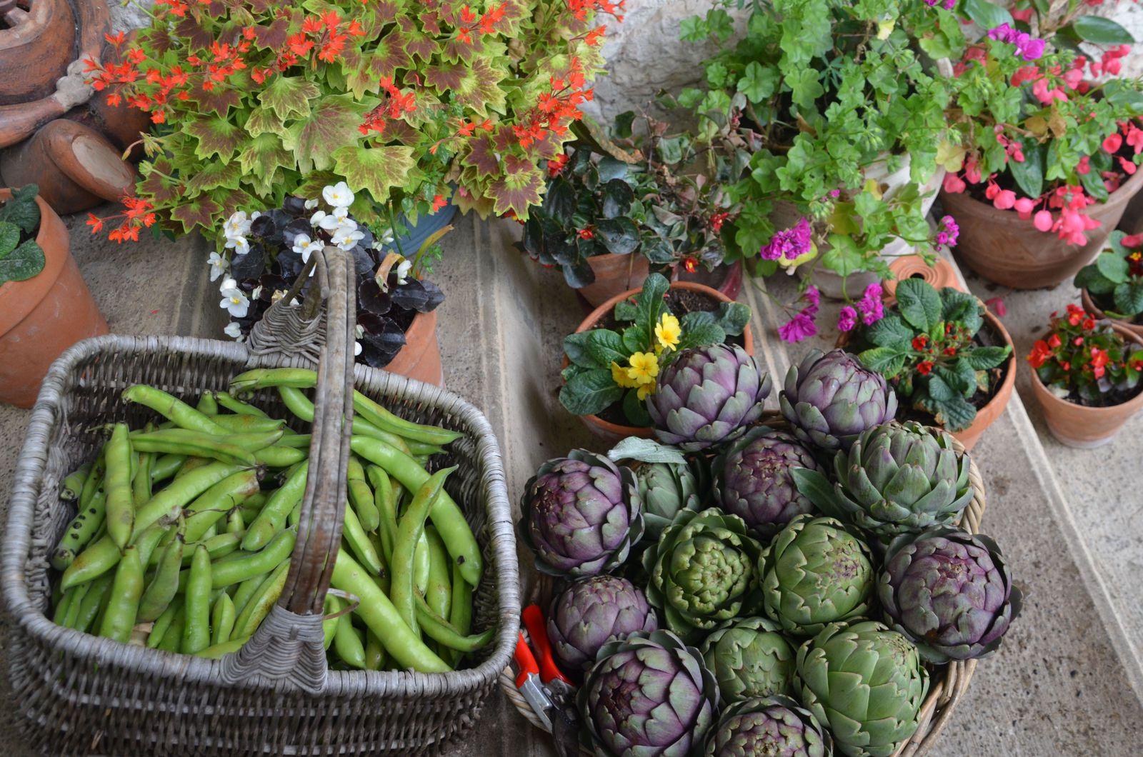Domaine Les Cyprès - Dans le jardin !