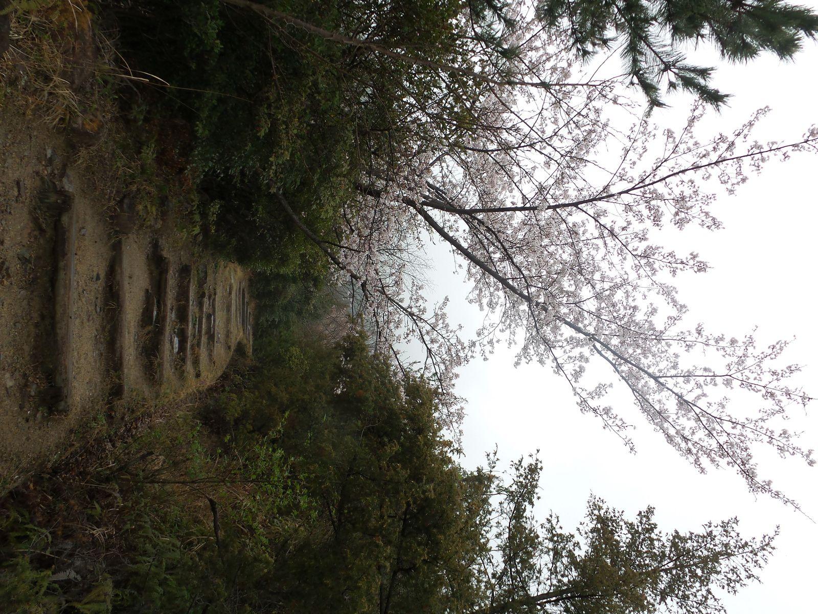 Avec Shoji Oikada, temple 81 et marche dans le brouillard