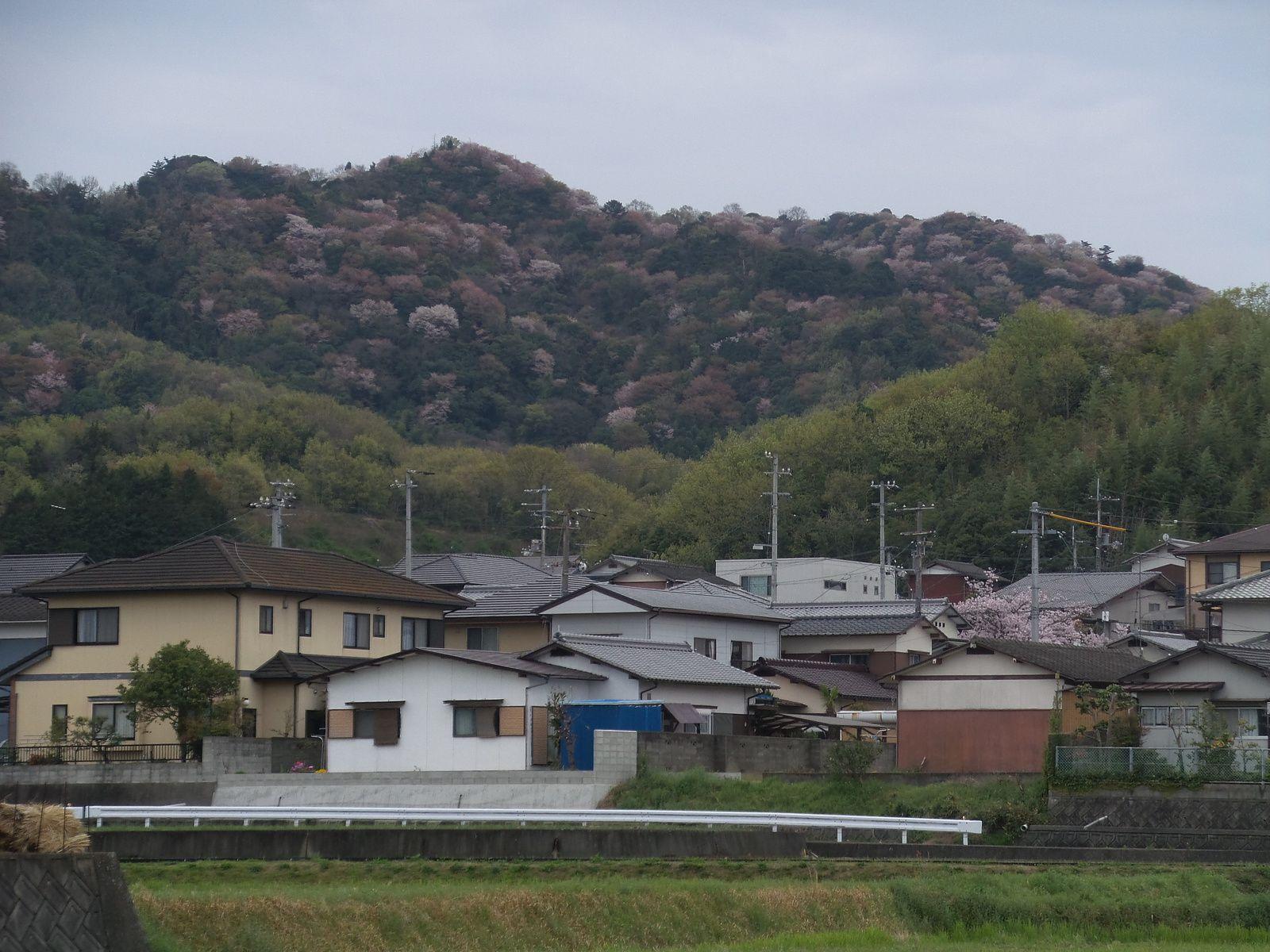 Temple 85 à 87 Takamatsu