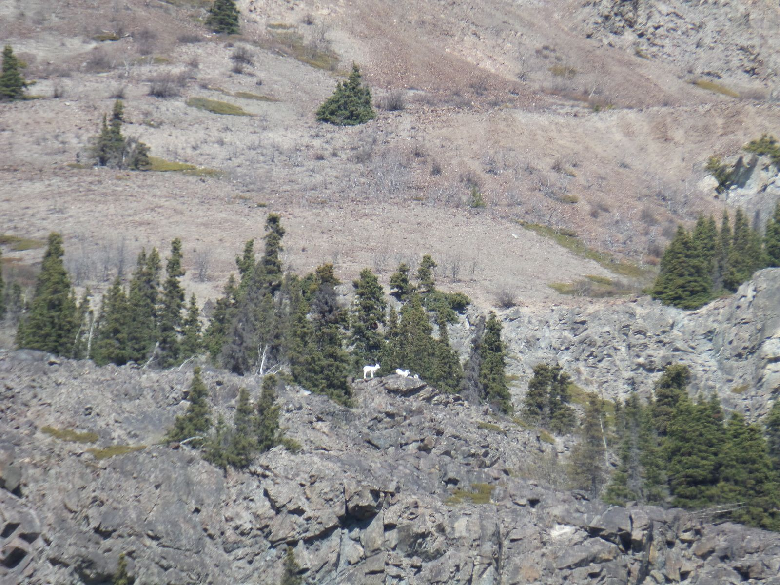J'aperçois des mouflons au loin juste avant de terminer ma randonnée