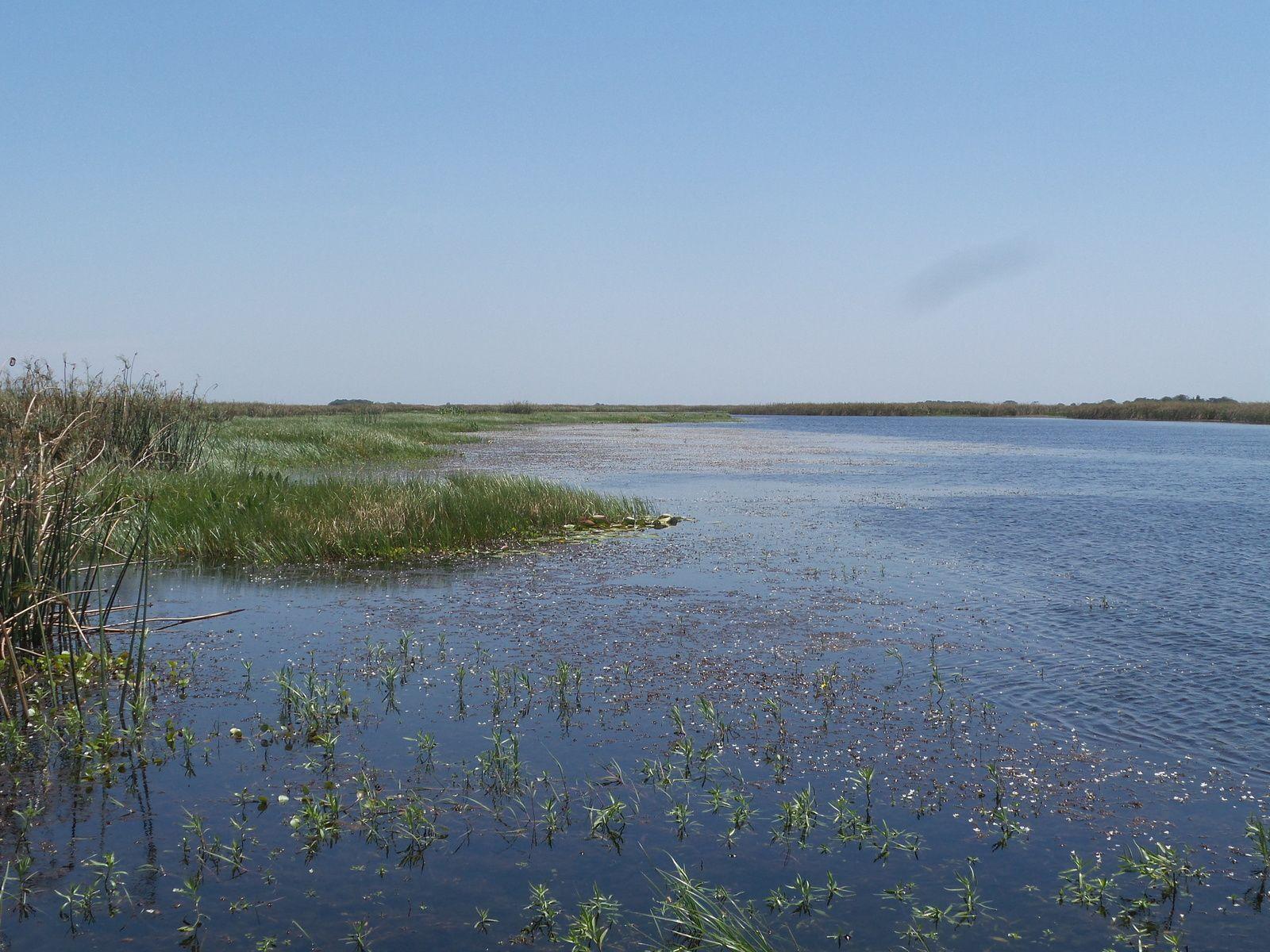 Vaste étendue d'eau douce et de marais