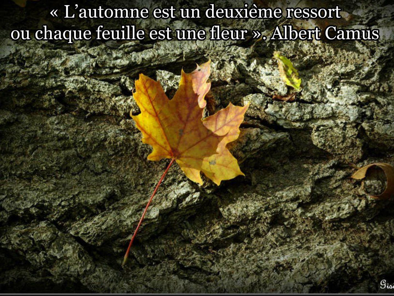 Photo Gisèle