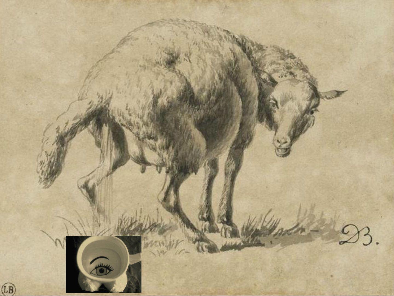 Le vacher, les boeufs et le mérinos