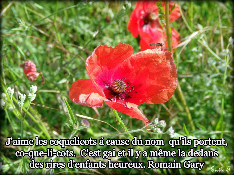 Image / Citation 38 (1)  / Photos de Gisèle à accompagner d'une citation
