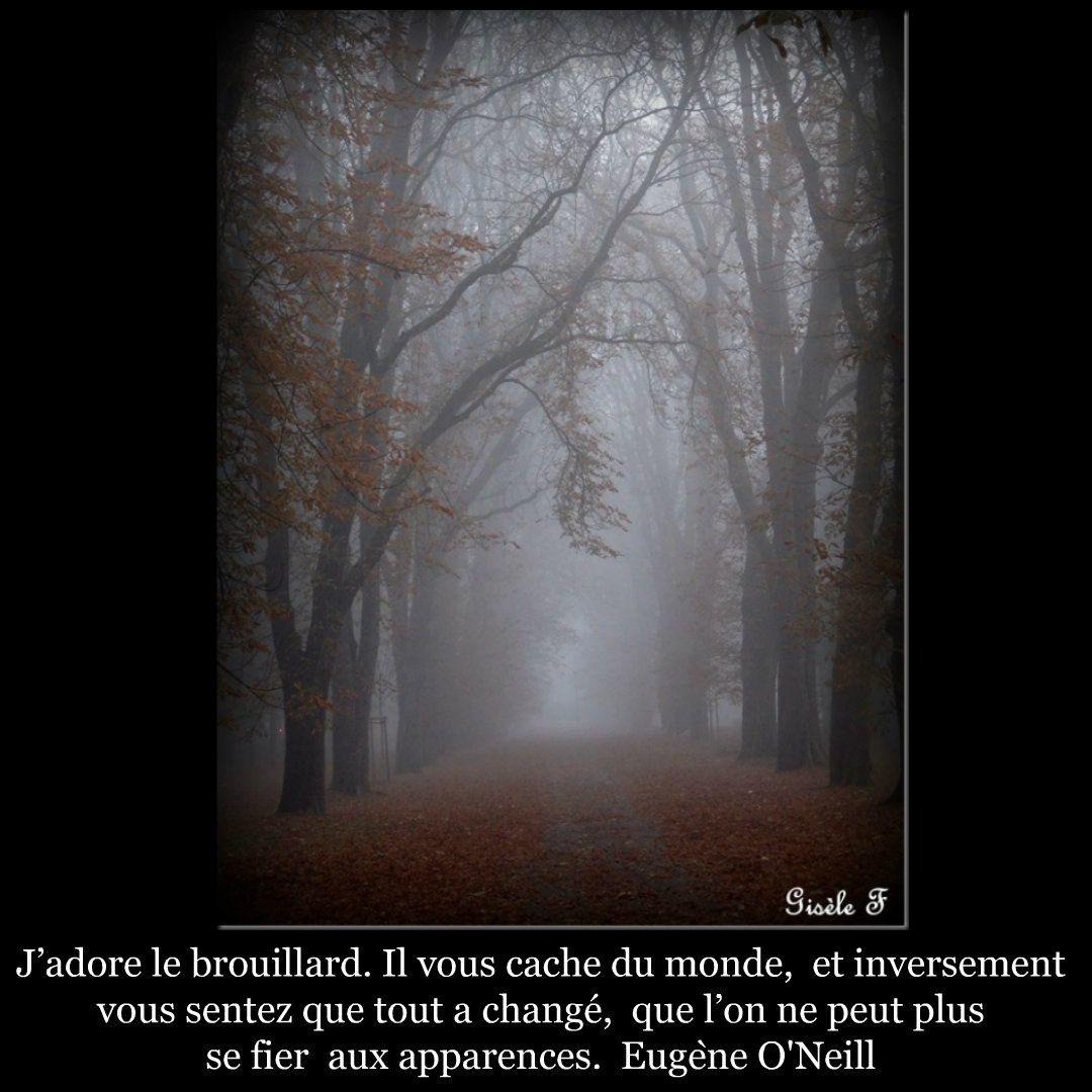Image citation 40