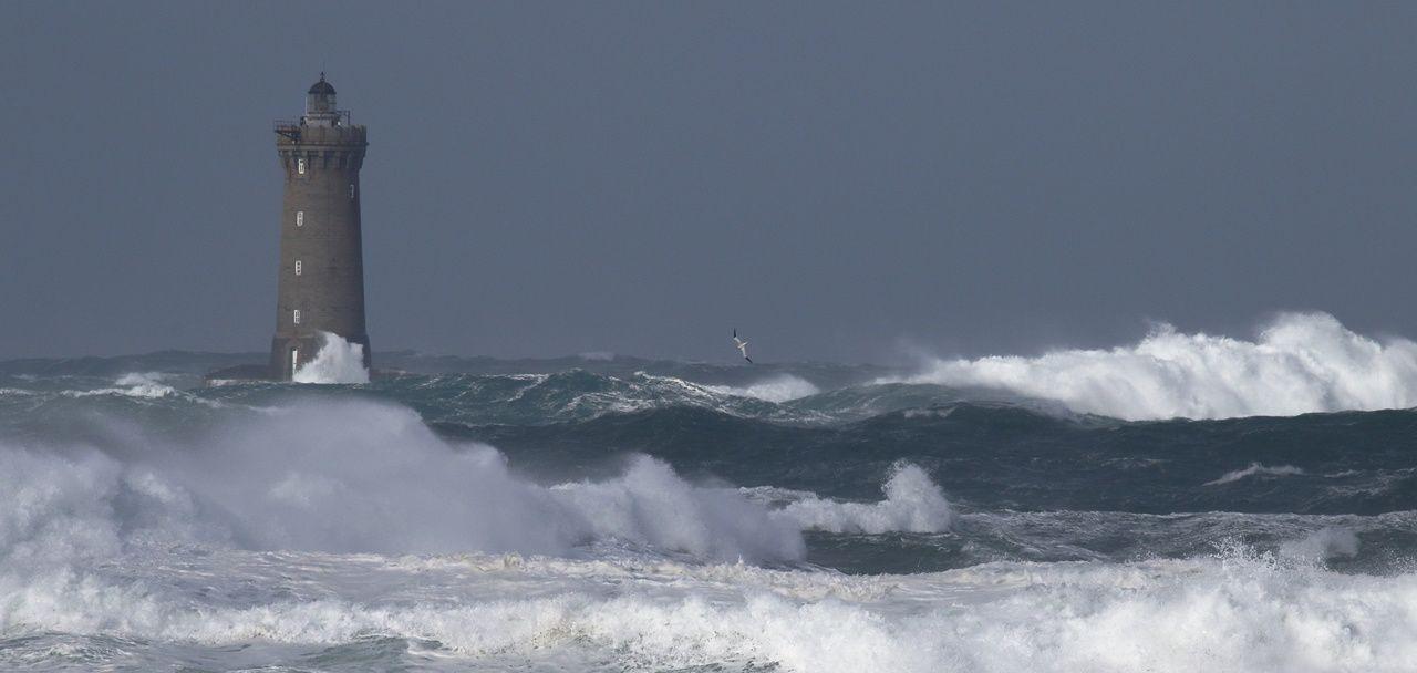 Le phare du Four et un fou de bassan
