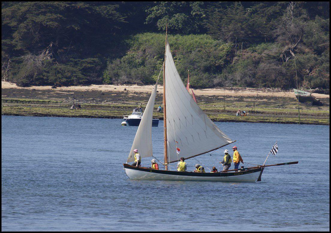 Petits et grands voiliers se cotoient sur le golfe du Morbihan durant une semaine....
