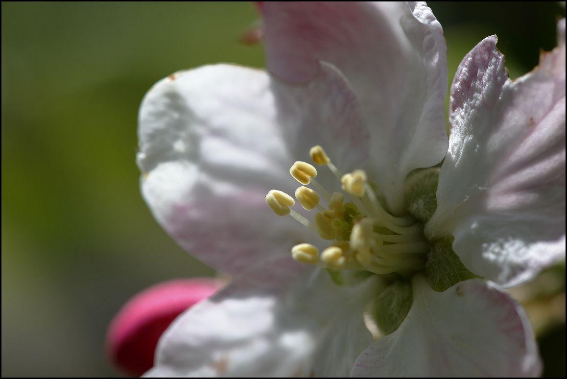 Dans mon jardin... malgré le confinement Covid 19 , le printemps est là !