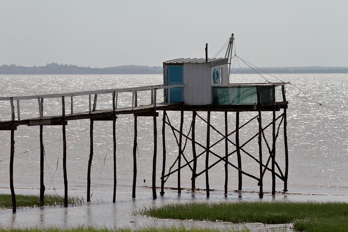 Parc nature de VITREZAY , sur l'estuaire de la GIRONDE- mai 2015.