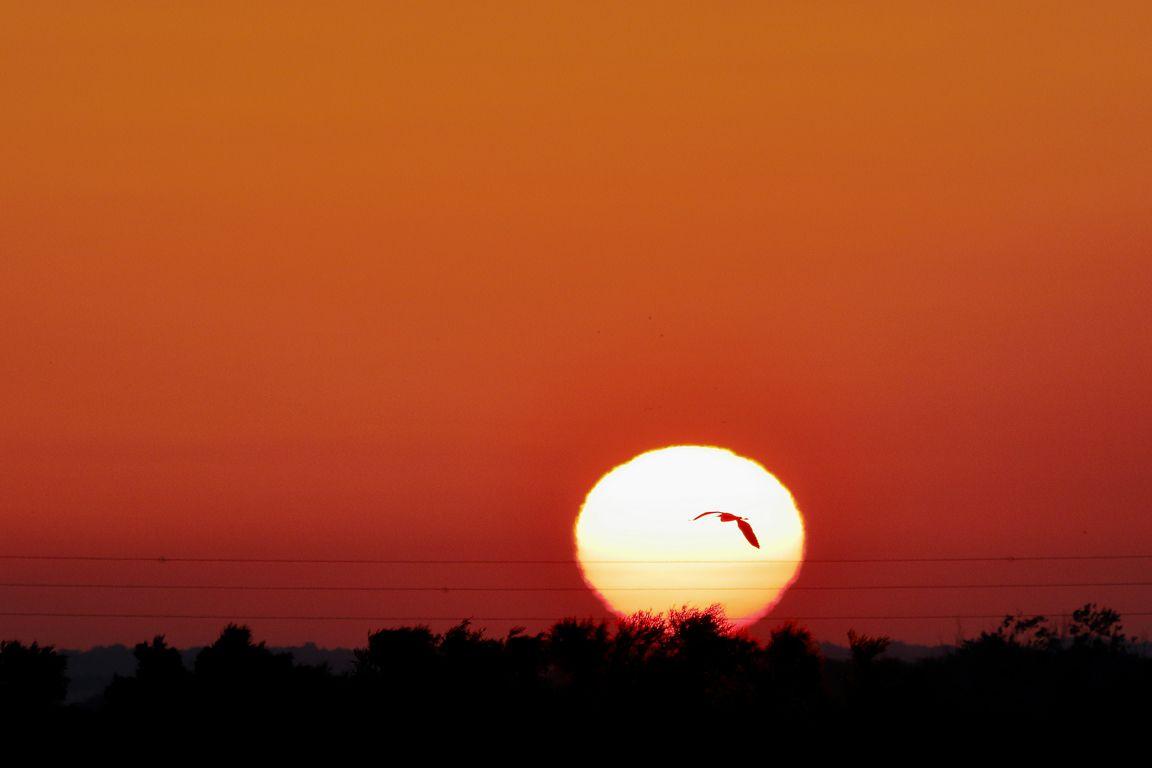 Héron passant devant le soleil levant