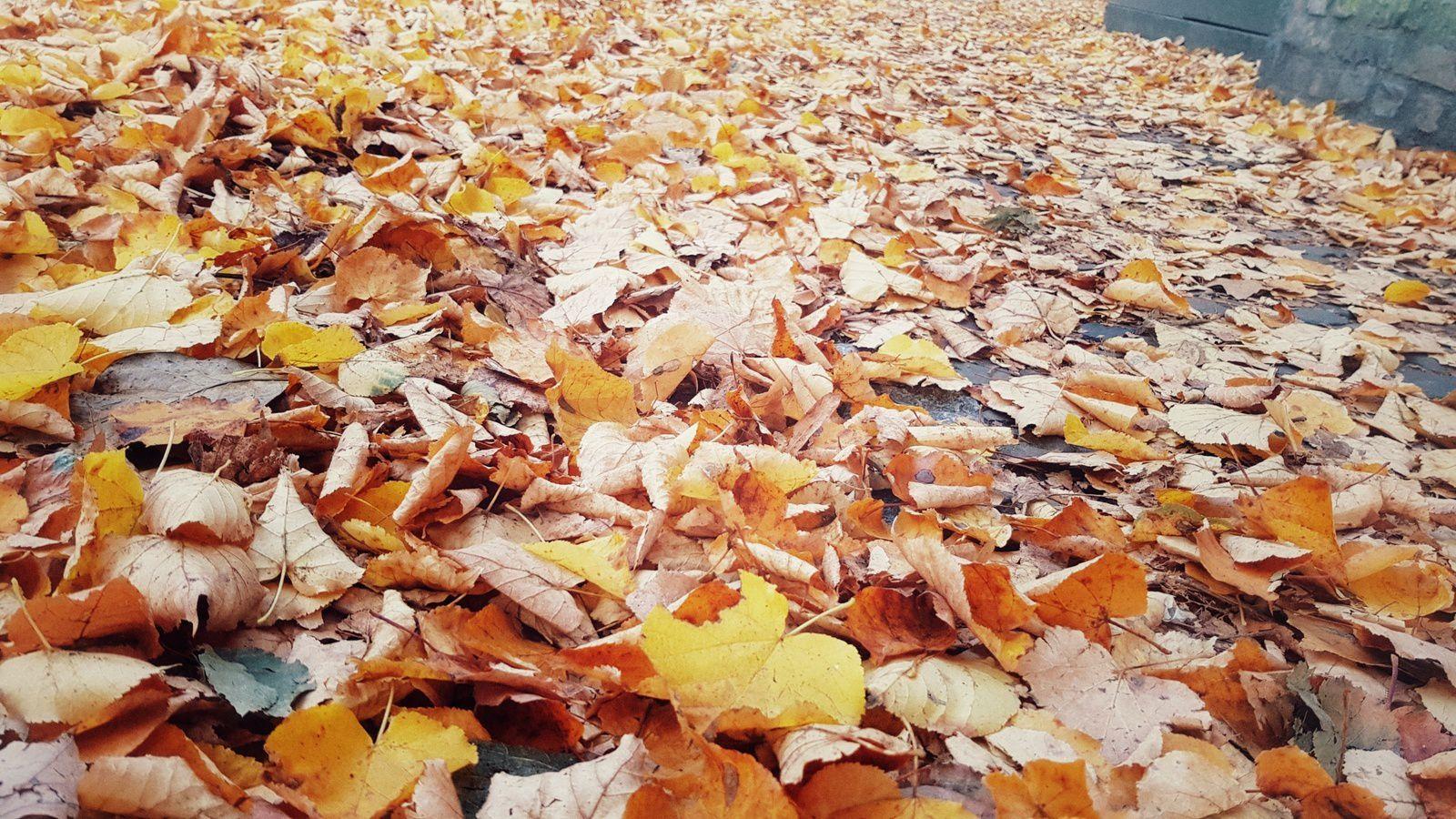 Le bruit des feuilles