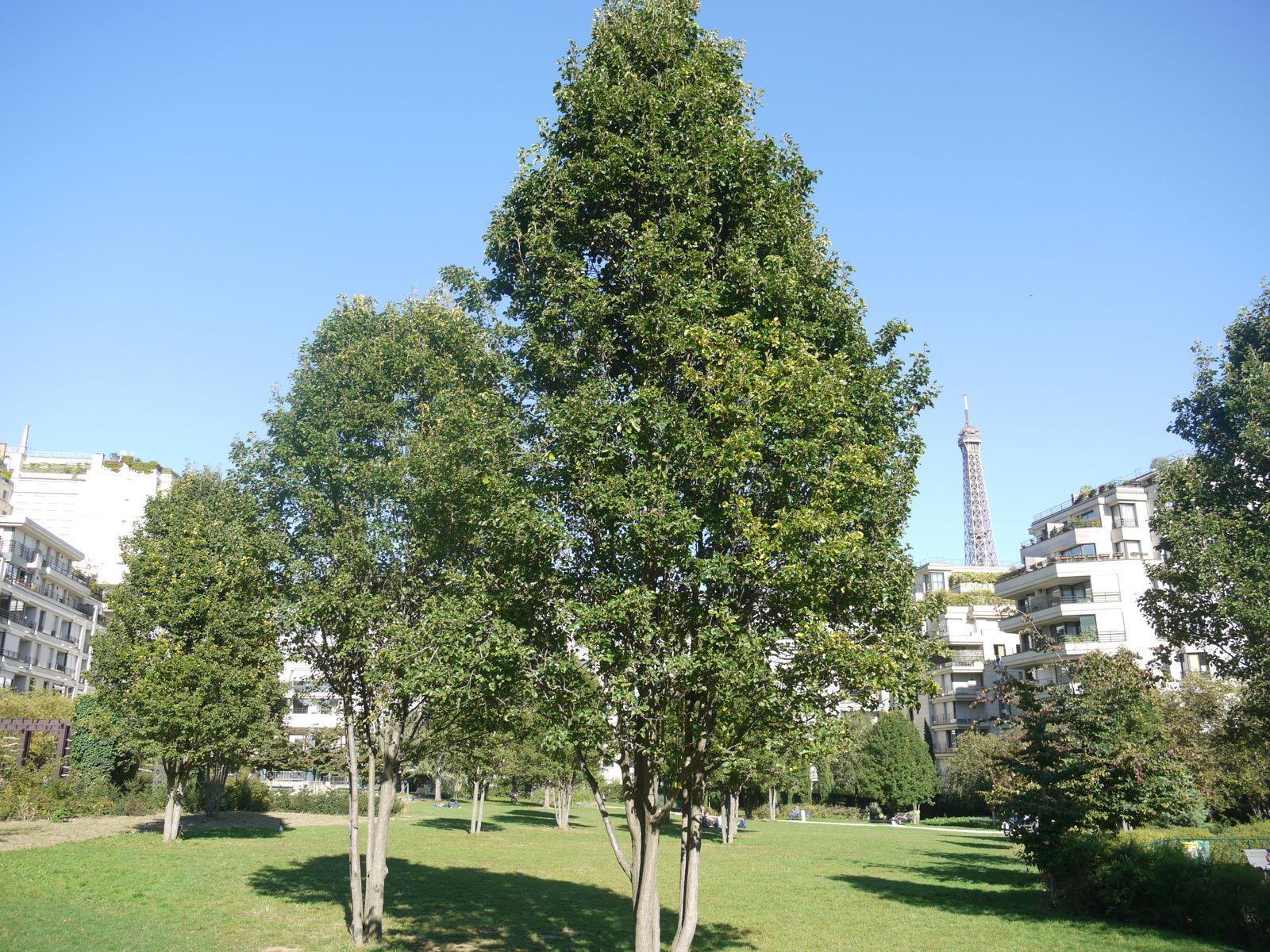 - Paris - Une balade au parc de Passy