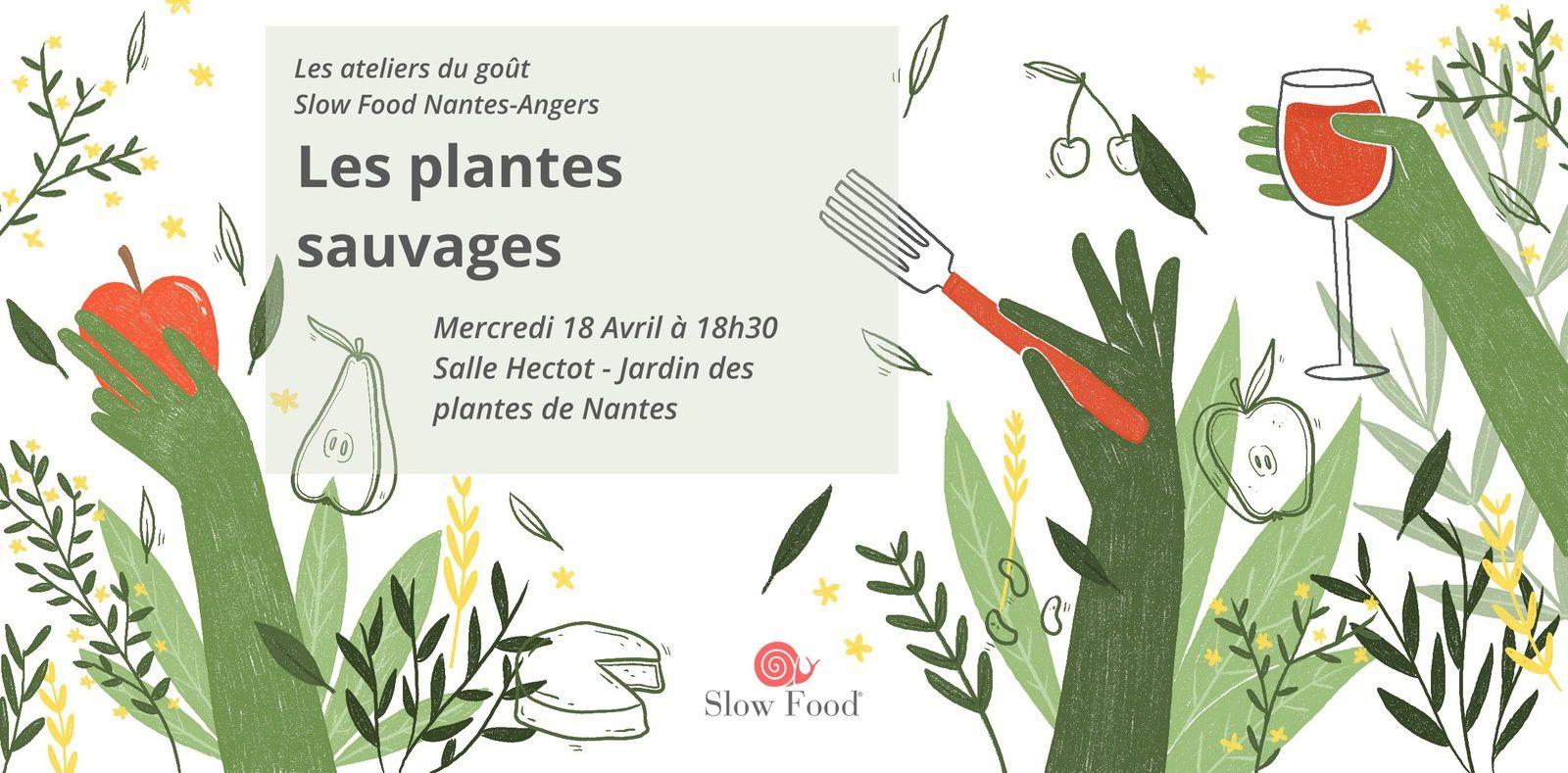 Prochain atelier du goût - les plantes sauvages - mercredi 18 avril
