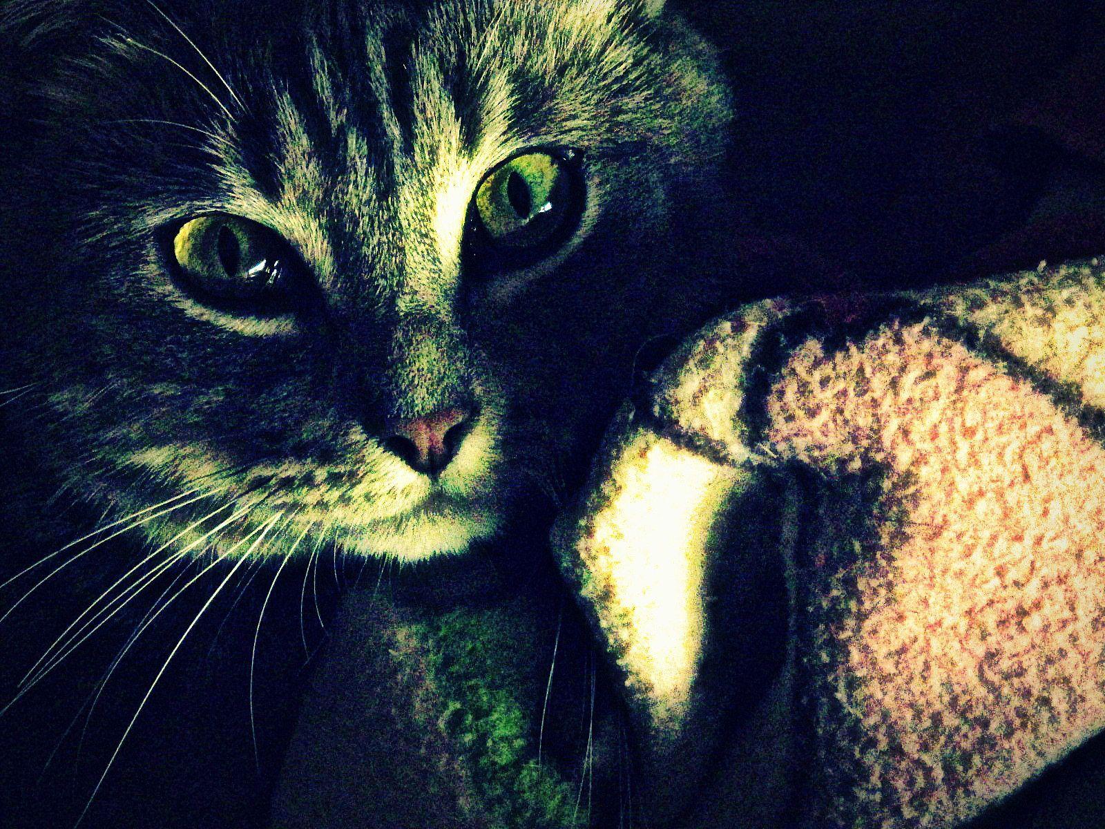 ~ La nuit, tous les chats sont gris... Plus ou moins ! ^^' ~ #TataChat #Câline