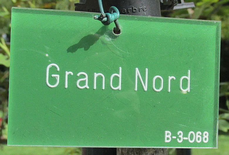 ~ Grand Nord ~ Rosier unicolore ~ Blanc ~ #Humour #Froid #Nord