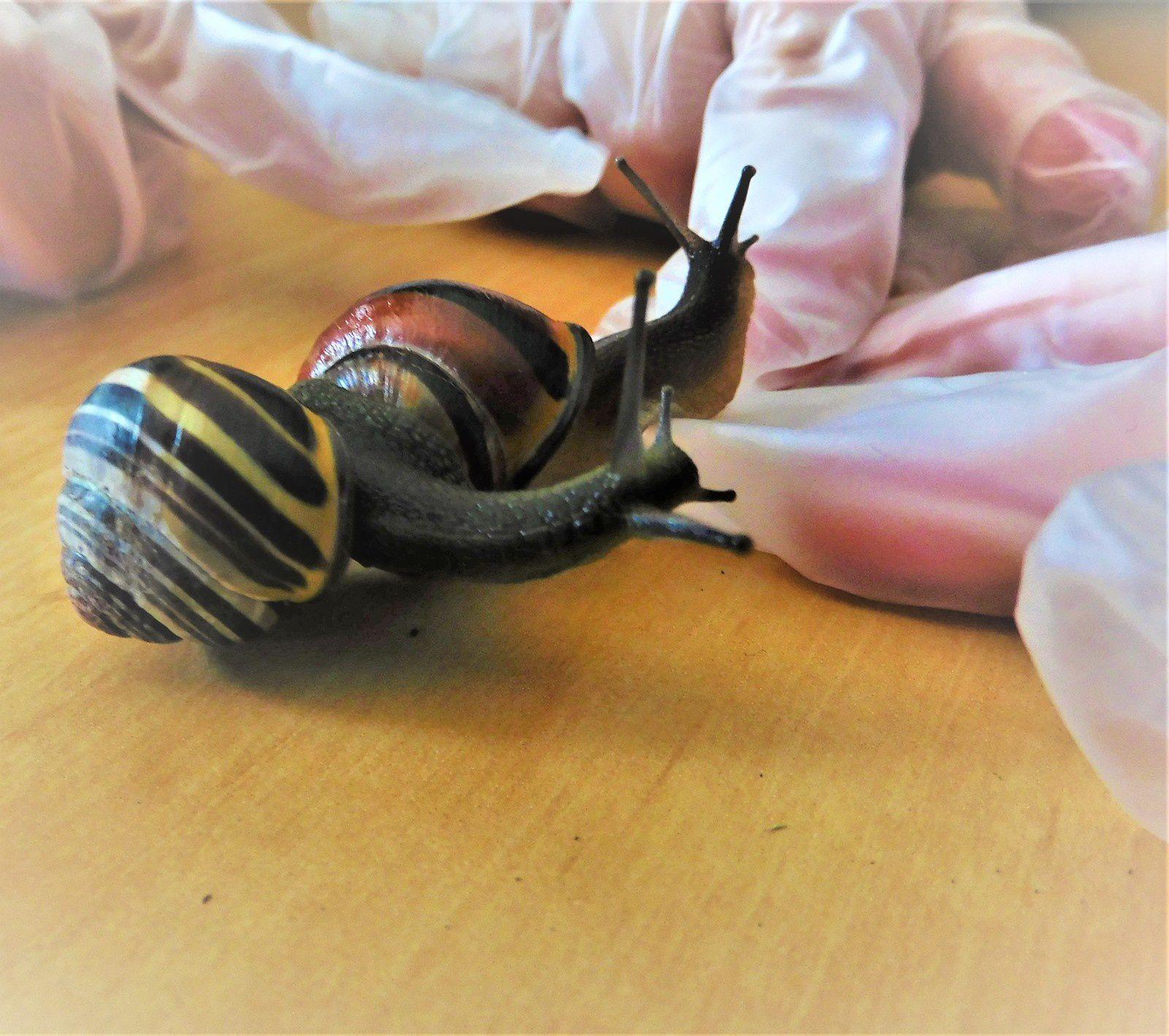 ~ Rencontre avec Harold, l'escargot ~ Un nouveau colocataire ~ PA 1 ~