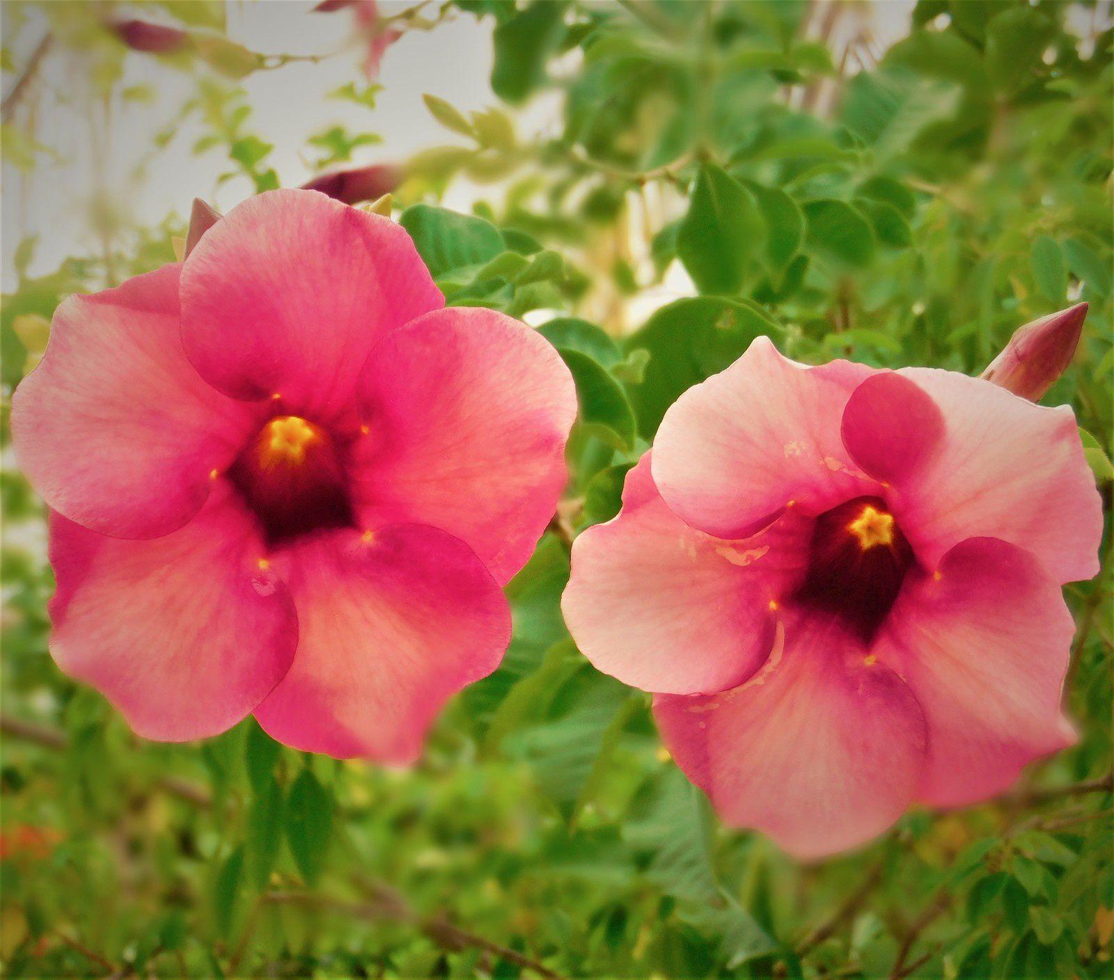 ~ Fleurs du jardin de Monette ~