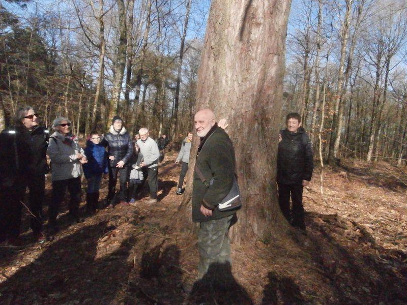 Un premier arbre retient ici notre attention.