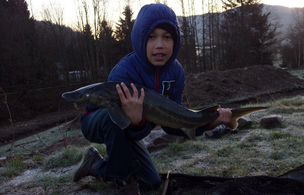 Superbe pêche à l'Esturgeon !!!