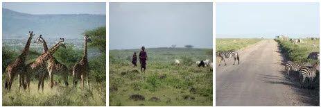 VOTRE SAFARI PRIVÉ À LA CARTE avec OBJECTIF TANZANIA OBJECTIF TANZANIA agence spécialisée dans les safaris sur mesure en Tanzanie