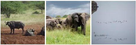 Objectif Tanzania : Le spécialiste des safaris à la carte en Tanzanie