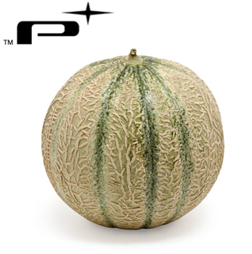 Le Platinum Gros Melon Engine