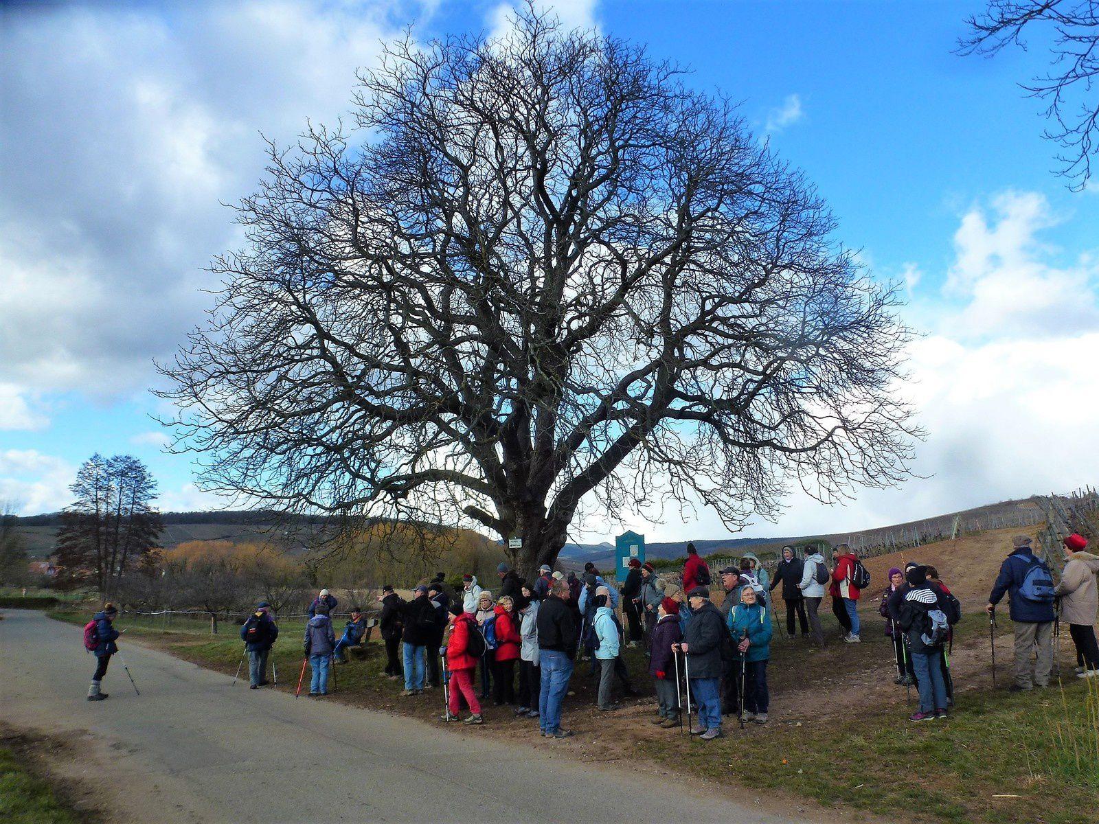 Sortie séniors, c'était le 7 mars au Bollenberg.