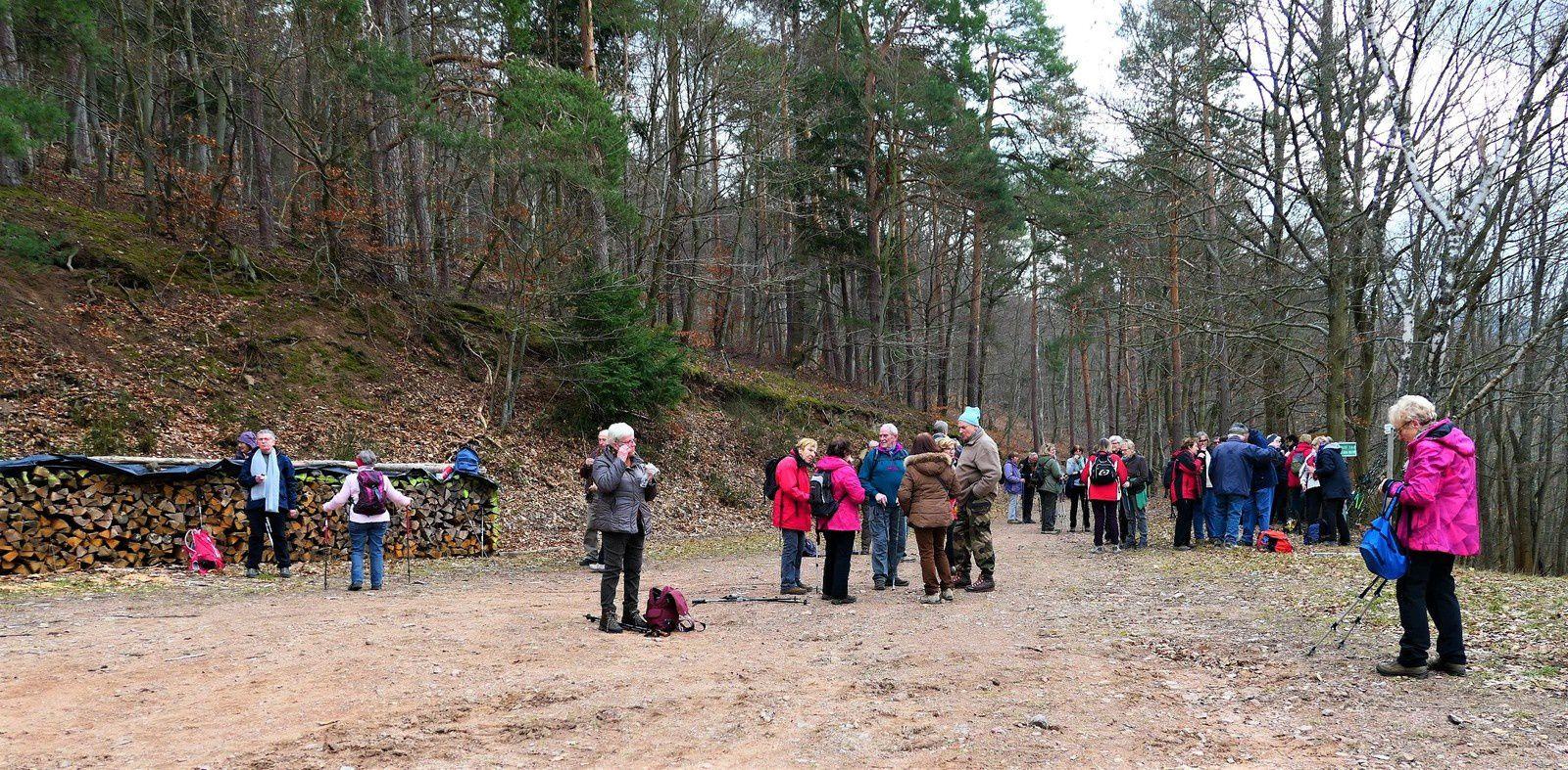 Sortie séniors du 20 février 2019, Dans les bois de Griesbach-au-Val.