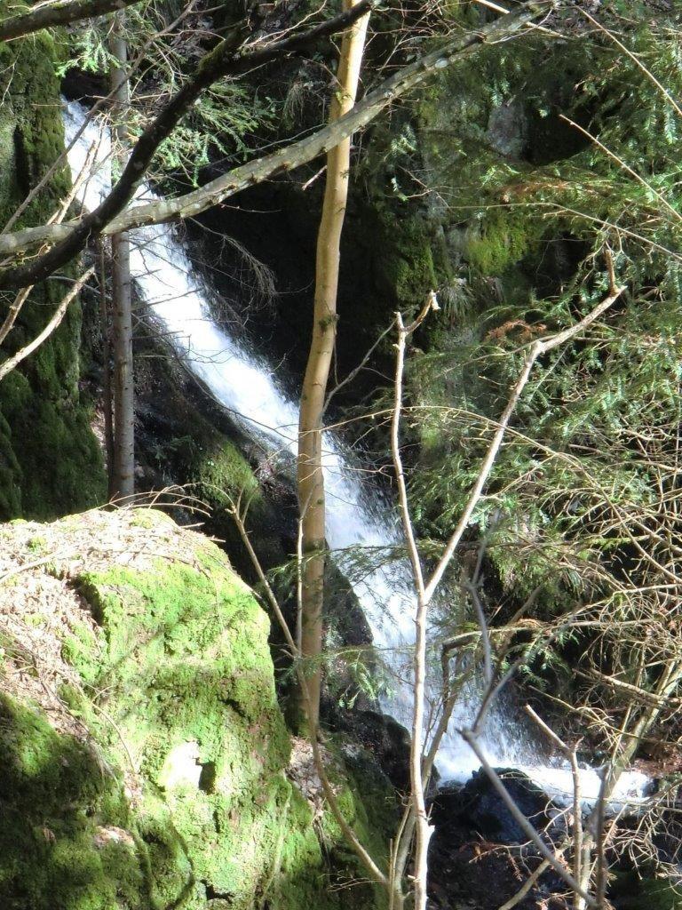 C'était le 20 mars, dans le massif du Schneeberg, avec les randonneurs (suite)