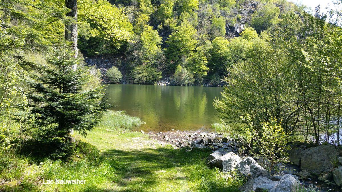 C'était le 15 mai, aux lac de Neuweiher et des Perches, avec les randonneurs