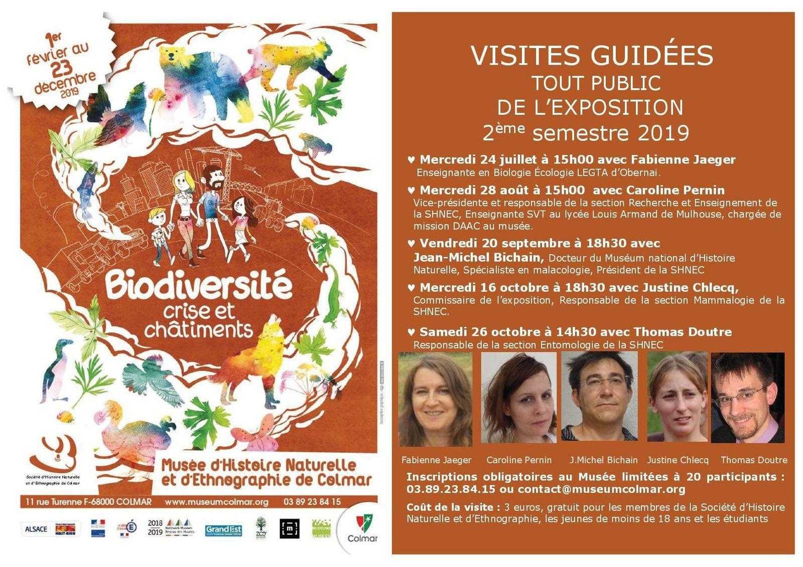 Grand-Tétras (photo : Olivier Gutfreund, sur le site du muséum : museumcolmar.org)
