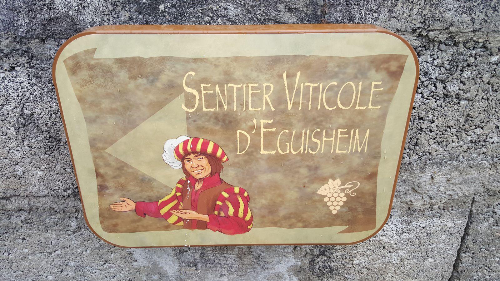 Sortie séniors, le 4 mars 2020, sentier viticole des grands crus d'Eguisheim