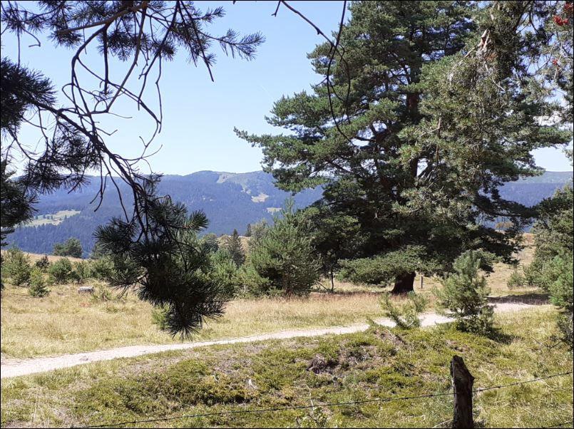 C'était le mercredi 29 juillet avec les randonneurs, de Turckheim au col de la Schlucht