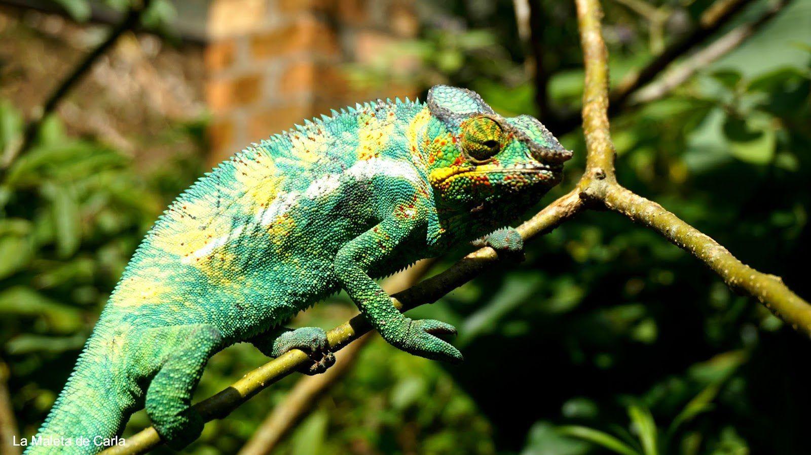 Imágenes de Madagascar.- El Muni.