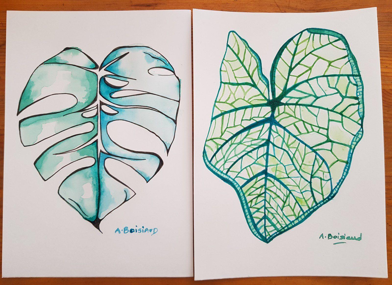 Dessin et aquarelle de plantes vertes, Monstera (14,8 x 21 Cm)