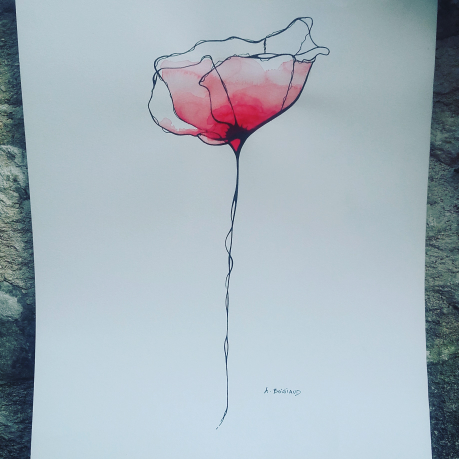 Red coquelicot