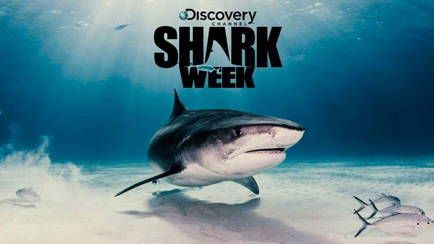 La Shark Week de retour pour une édition 2019 dès le 29 juillet sur Discovery Channel