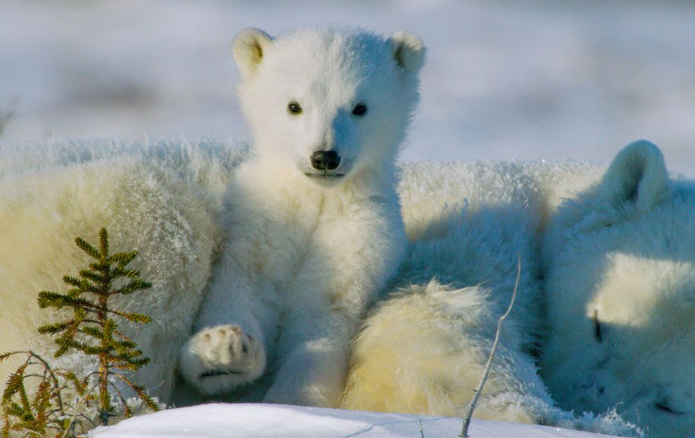 National Geographic Wild proposera une programmation spéciale fêtes de fin d'année dès le 1er décembre