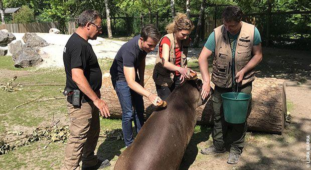 """La série documentaire """"Une vie de bêtes"""", de retour dès ce soir sur Ushuaïa TV (liste des épisodes)"""