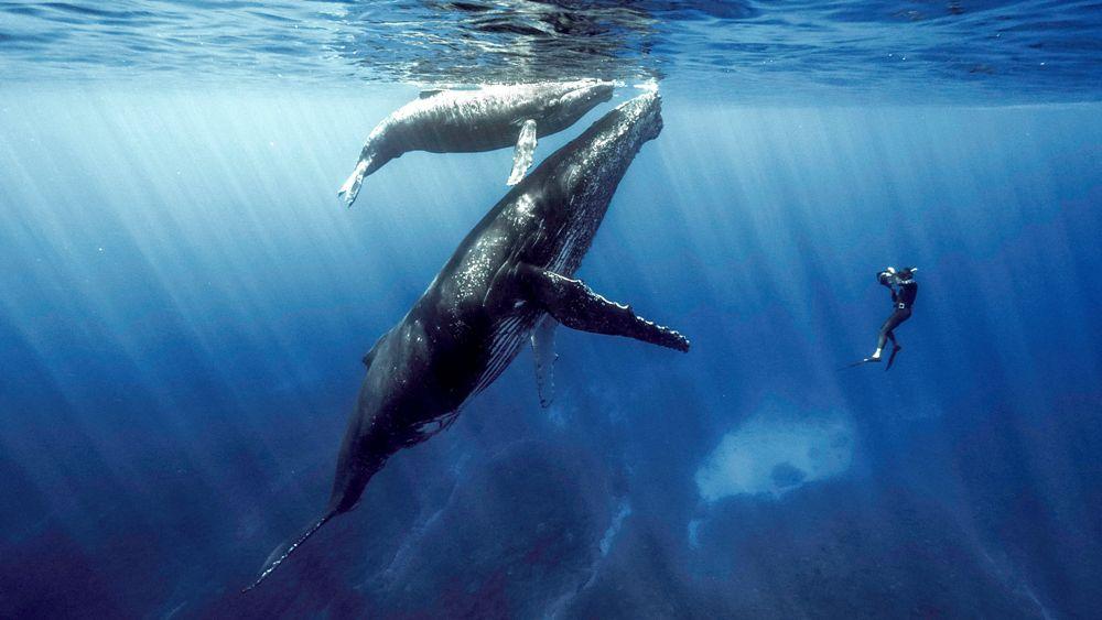 """""""Quand baleines et tortues nous montrent le chemin"""", documentaire raconté par Cécile de France diffusé ce soir à 19h sur ARTE (vidéo)"""