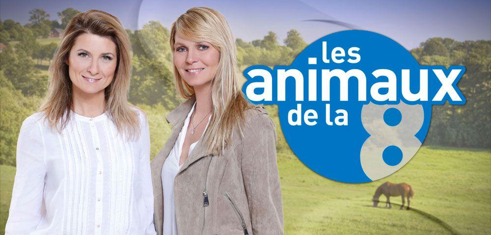 """Le magazine """"Les animaux de la 8"""" de retour dès dimanche sur C8"""
