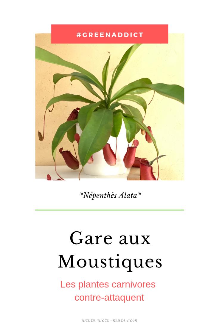 moustique-plantes-carnivores-wow-mum-blog.com-green-maman