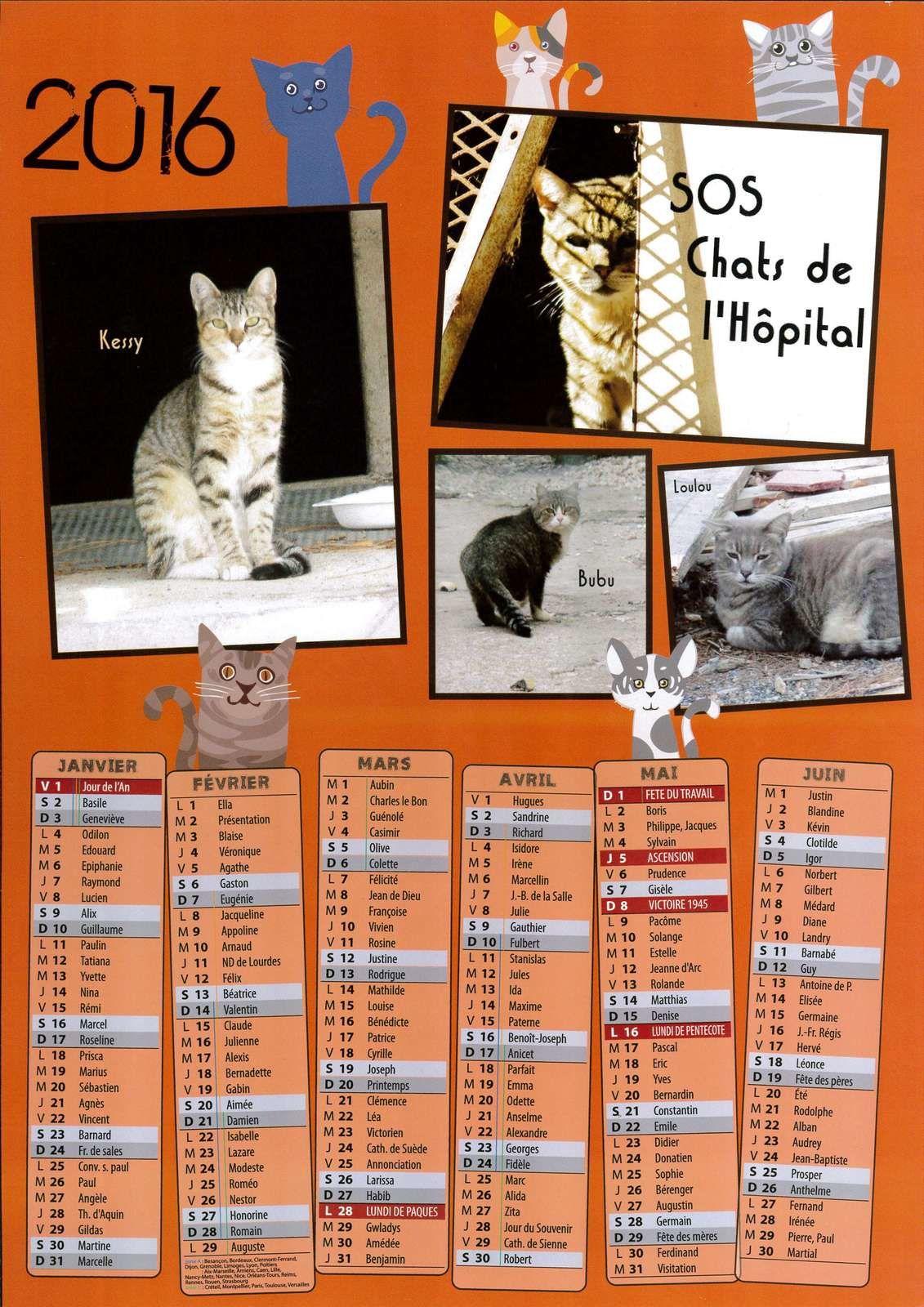 Bubu sur le calendrier 2016 des Chats de l'Hôpital de Perpignan