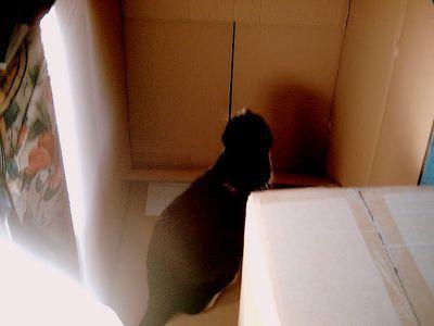22 février 2012, Sainte-Foy, l'arrivée de l'arbre à chat