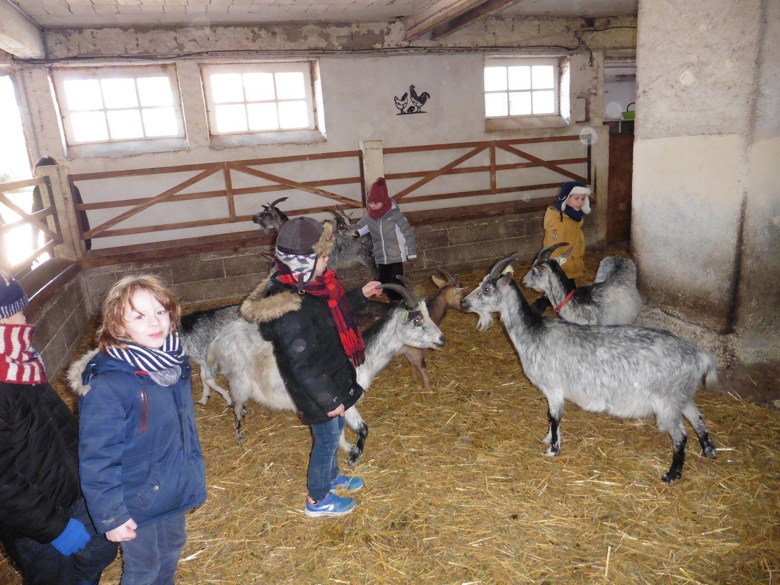 Les enfants ont également rendu visite aux chèvres!