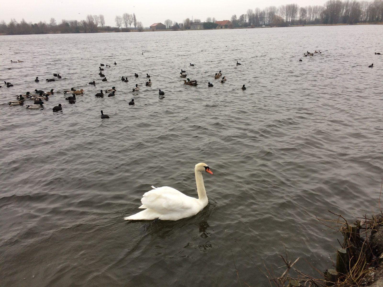 Il faisait un froid de canard !!!!