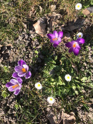 Fin du «printemps hivernal»